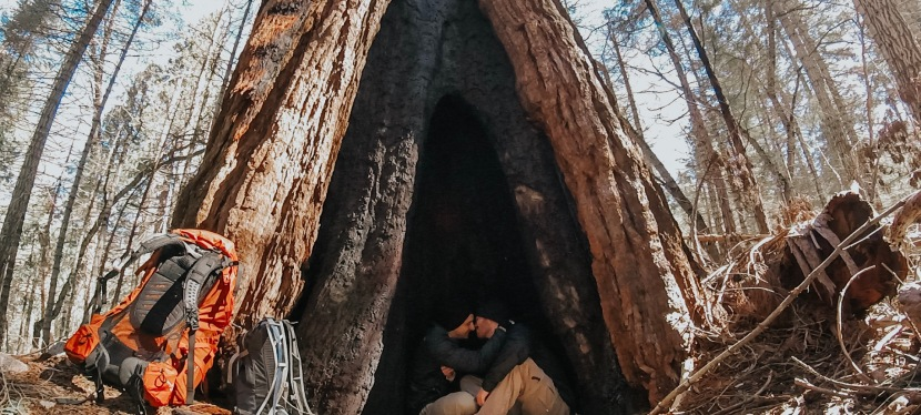How to See Sequoias in March